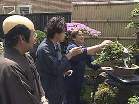 アダルトYOYO'Sへの道(5) アダルトYOYO'Sへの道「盆栽」①  千歳の盆栽達人に弟子入り