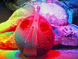 第47話 「死を呼ぶ氷魔人トドキラー」