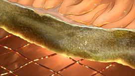 第1夜 鮭の塩焼き
