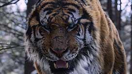 隻眼の虎(吹替)