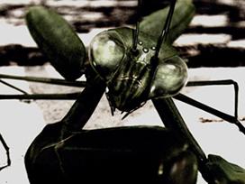 Episode01 Stormy Mantis